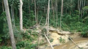 GabonForest